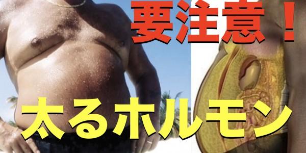 sam 自然治癒 肥満型ホルモン.001
